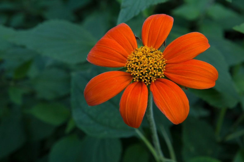 Orange blossom, Mounts Botanical Garden, West Palm Beach, FL