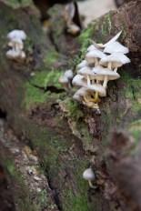 Mushrooms on a log, GA