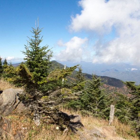 Mount Mitchell State Park, Pisgah National Forest, Blue Ridge Parkway, NC © Adel Alamo 2015