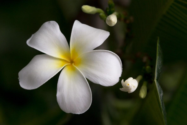 Bloom, Mounts Botanical Garden, West Palm Beach, FL