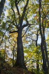 Trail, Cataloochee Valley, Great Smoky Mountain National Park, NC