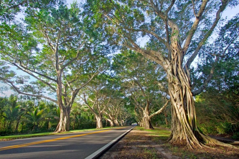 Bridge Road, Hobe Sound, FL