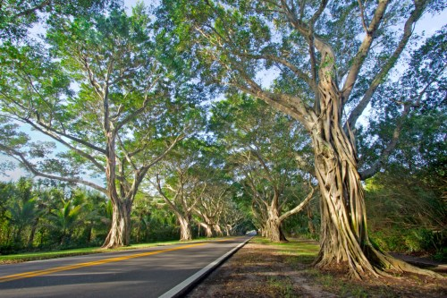 Bridge Road, Hobe Sound, FL