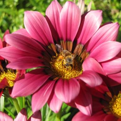 Happy Bee, Mounts Botanical Garden, West Palm Beach, FL