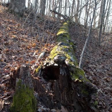 Neil's Gap Trail, Ravens Cliff Wilderness, Chattahoochee National Forest, Blue Ridge, GA © Adel Alamo 2014