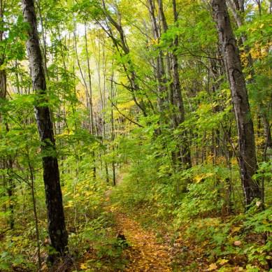 Sam's Gap Trail, Appalachian Trail, Mars Hill, NC © Adel Alamo 2015