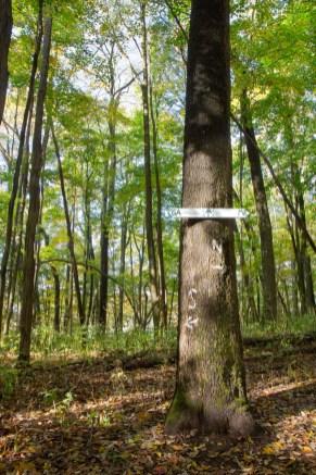Which Way?, Sam's Gap, Appalachian Trail, Mars Hill, NC © Adel Alamo 2015