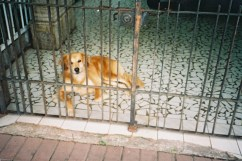 adelaide ivanova_dogs (5)
