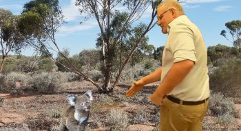 Koalas hate awkward situations like these