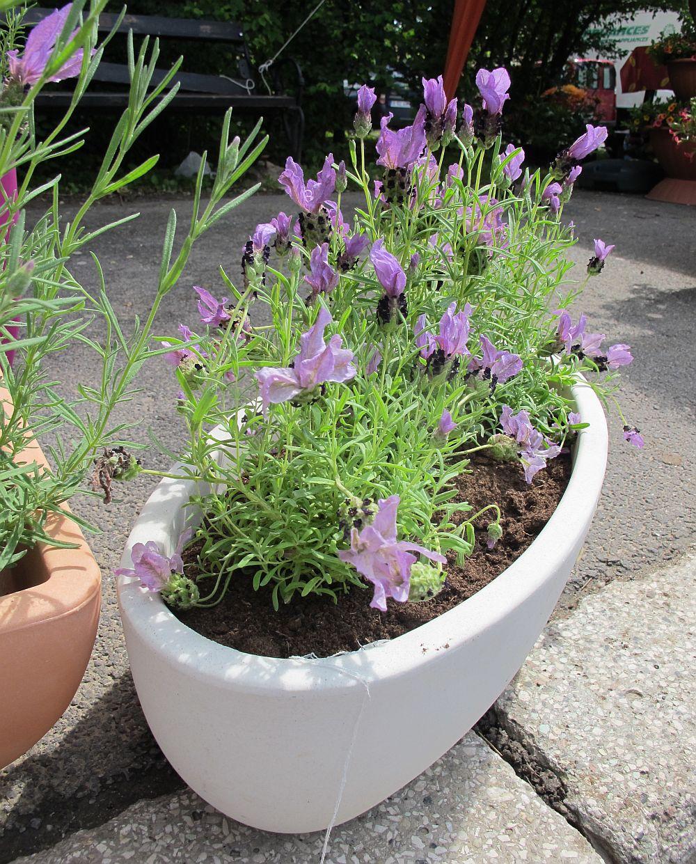 Ghivece si jardiniere marca Marchioro de la gradinarit-online.ro
