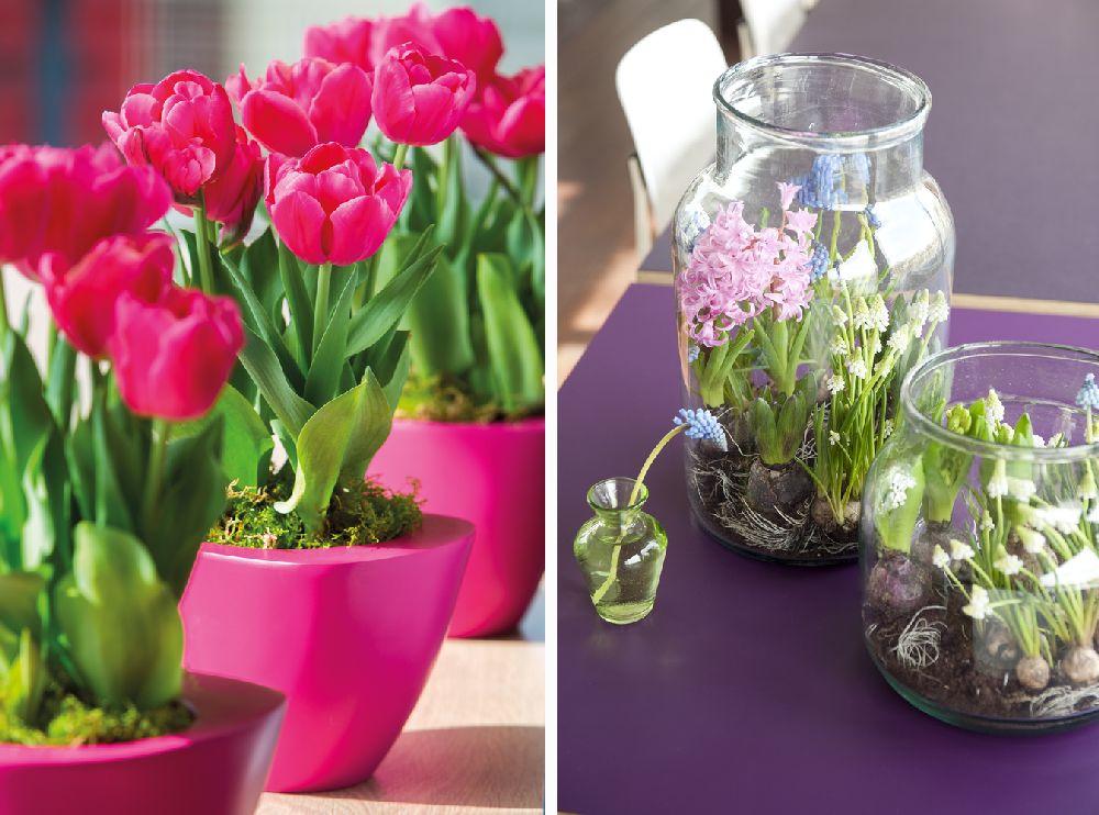 Cum trebuie îngrijite florile de primăvară cu bulbi, plantate în ghiveci?