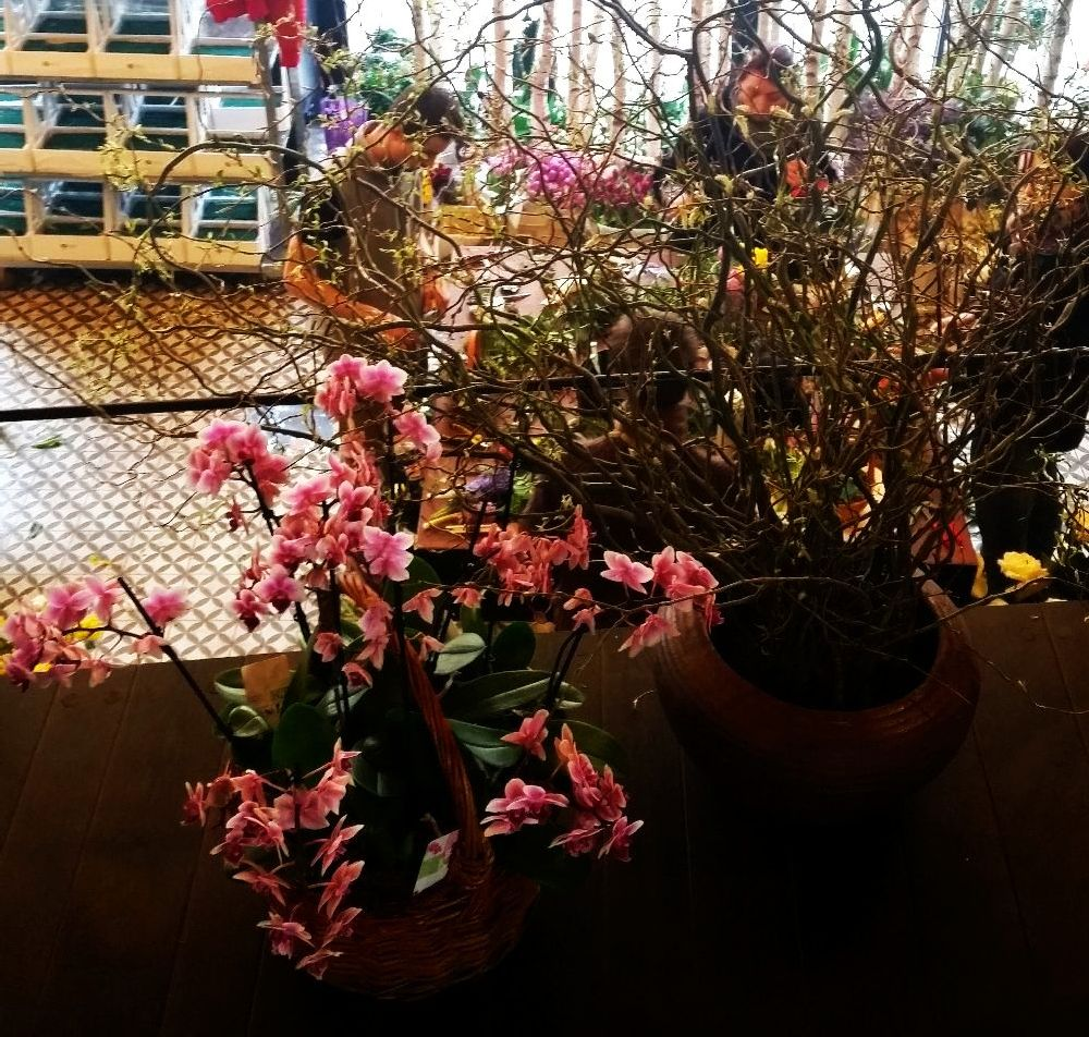 adelaparvu.com despre atelierul designerului florist Nicu Bocancea, Foraria Iris, design interior Pascal Delmotte (4)