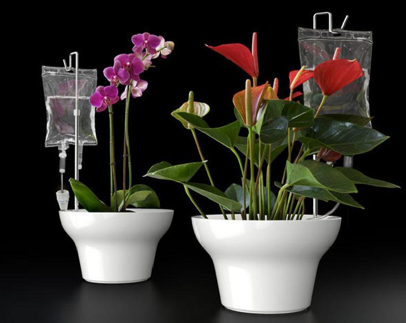 adelaparvu.com despre cum uzi plantele cand pleci in vacanta, Text Carli Marian (1)