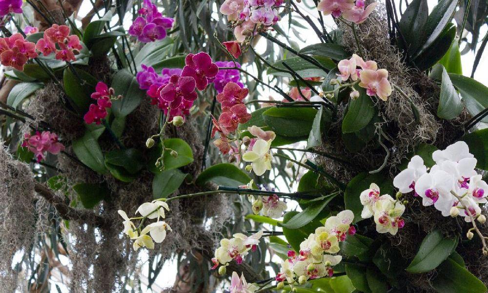 adelaparvu.com top 10 cele mai citite articole despre flori, plante, gradini in 2015 (6)