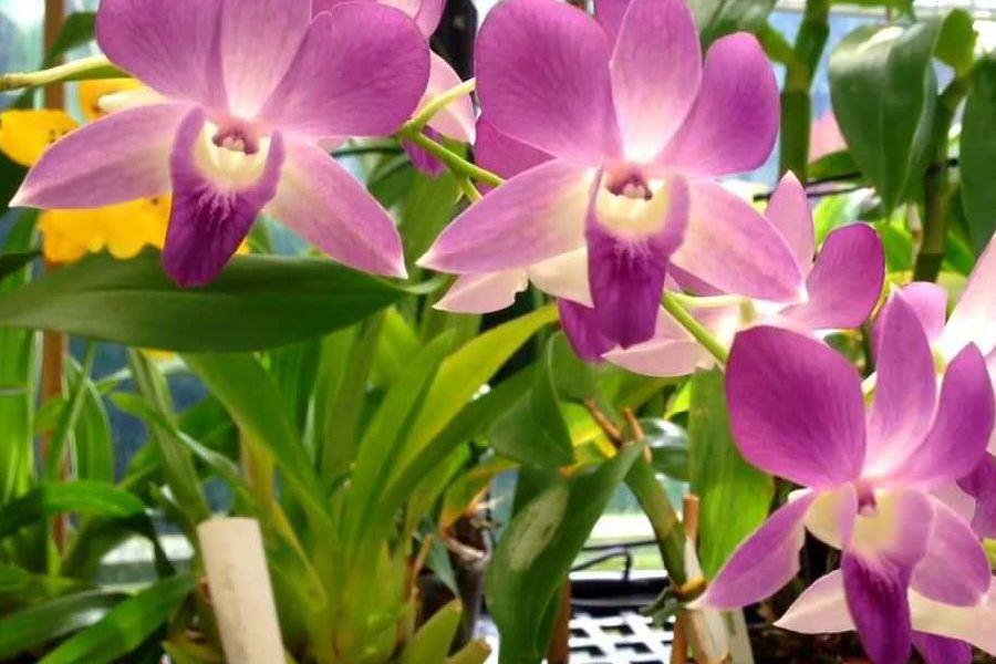 adelaparvu.com top 10 cele mai citite articole despre flori, plante, gradini in 2015 (8)