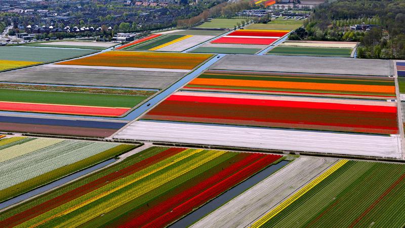 adelaparvu.com despre drumul lalelelor de la cultivare la recoltare, Sera Munster Olanda,Text Carli Marian (1)
