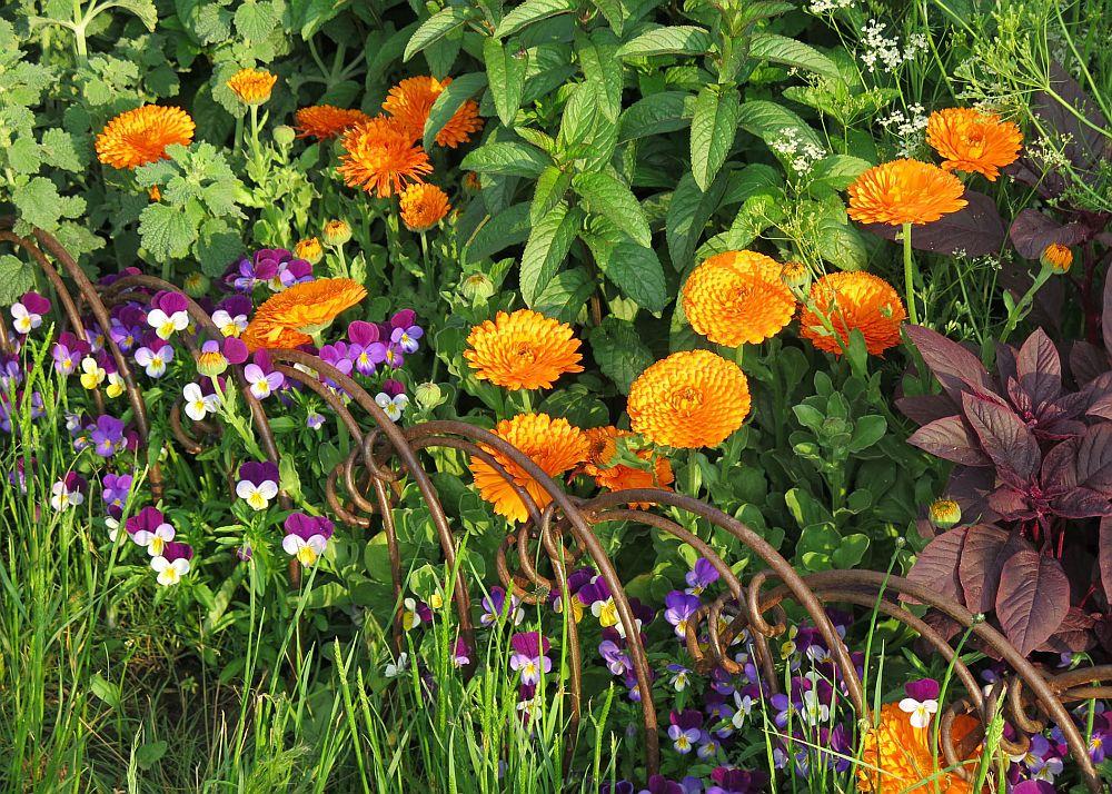 adelaparvu.com despre gradina cu plante medicinale, designer Jekka McVicar, A Modern Apothecary Garden, RHS Chelsea Flower Show 2016 (9)