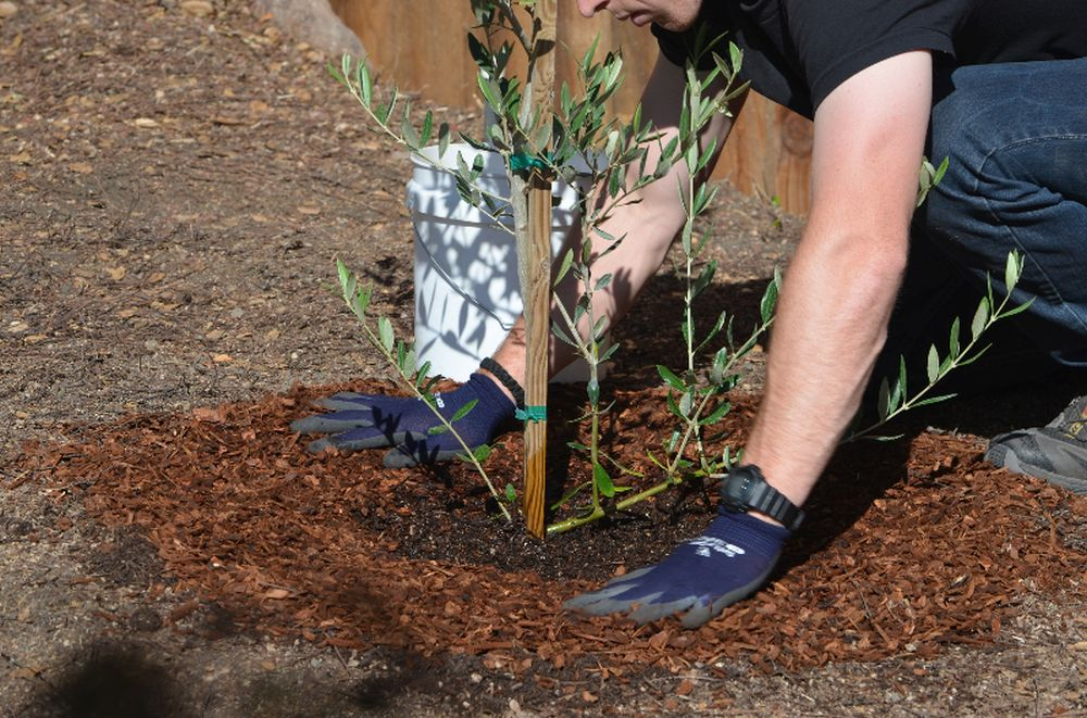 adelaparvu-com-despre-plantarea-copacilor-si-pomilor-in-gradina-text-carli-marian-4
