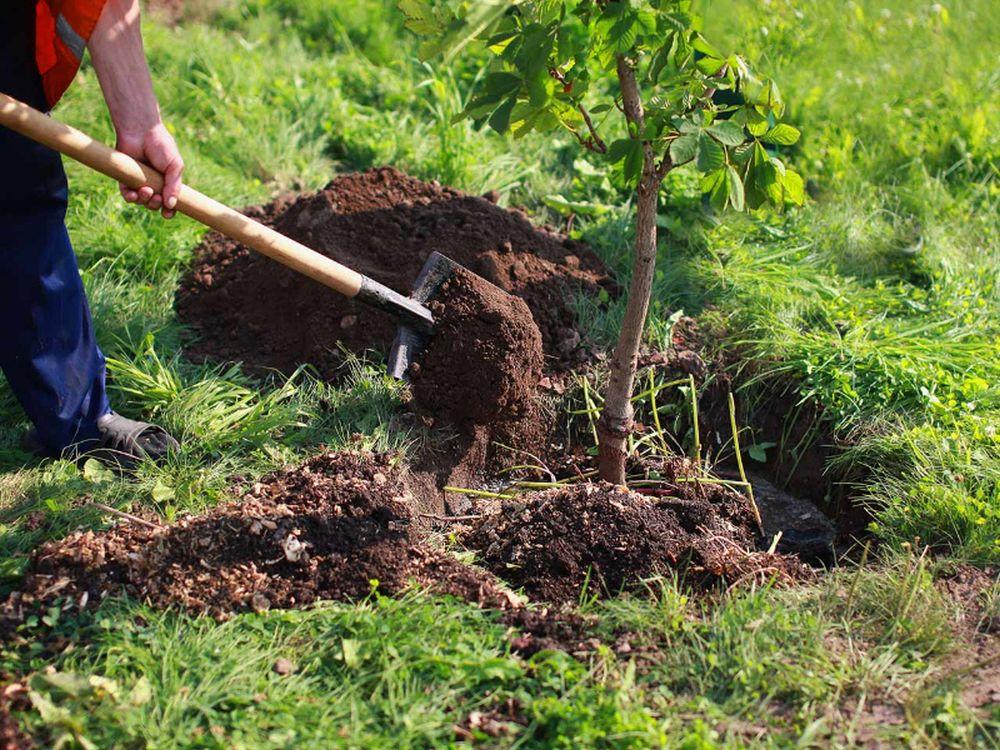 adelaparvu-com-despre-plantarea-copacilor-si-pomilor-in-gradina-text-carli-marian-6