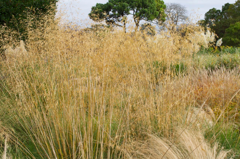 adelaparvu-com-despre-plante-care-fac-gradina-frumoasa-toamna-si-iarna-text-carli-marian-in-foto-stipa