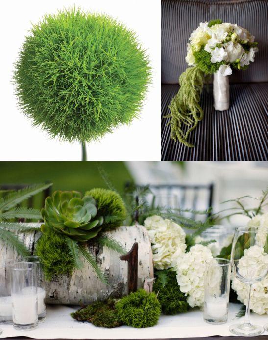 Dianthus green ball in aranjamente de nunta