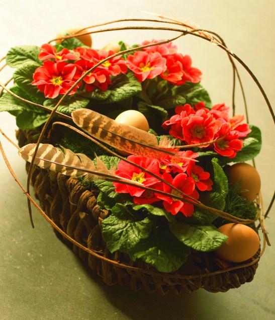 Cel mai usor poti realiza aranjamente in cosuriimpletite. Este mascat si ghivechiul plantelor si ai loc si pentru oua. Aici aranjament cu Primula vulgaris