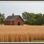Wheatscapes