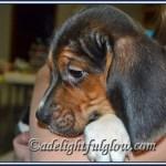 Siding, Valentines, Puppy {hello monday}