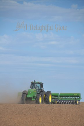 drilling-the-wheat-2016-9