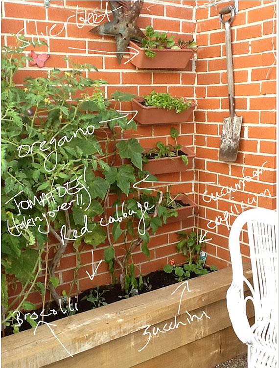 vertical vegetable garden