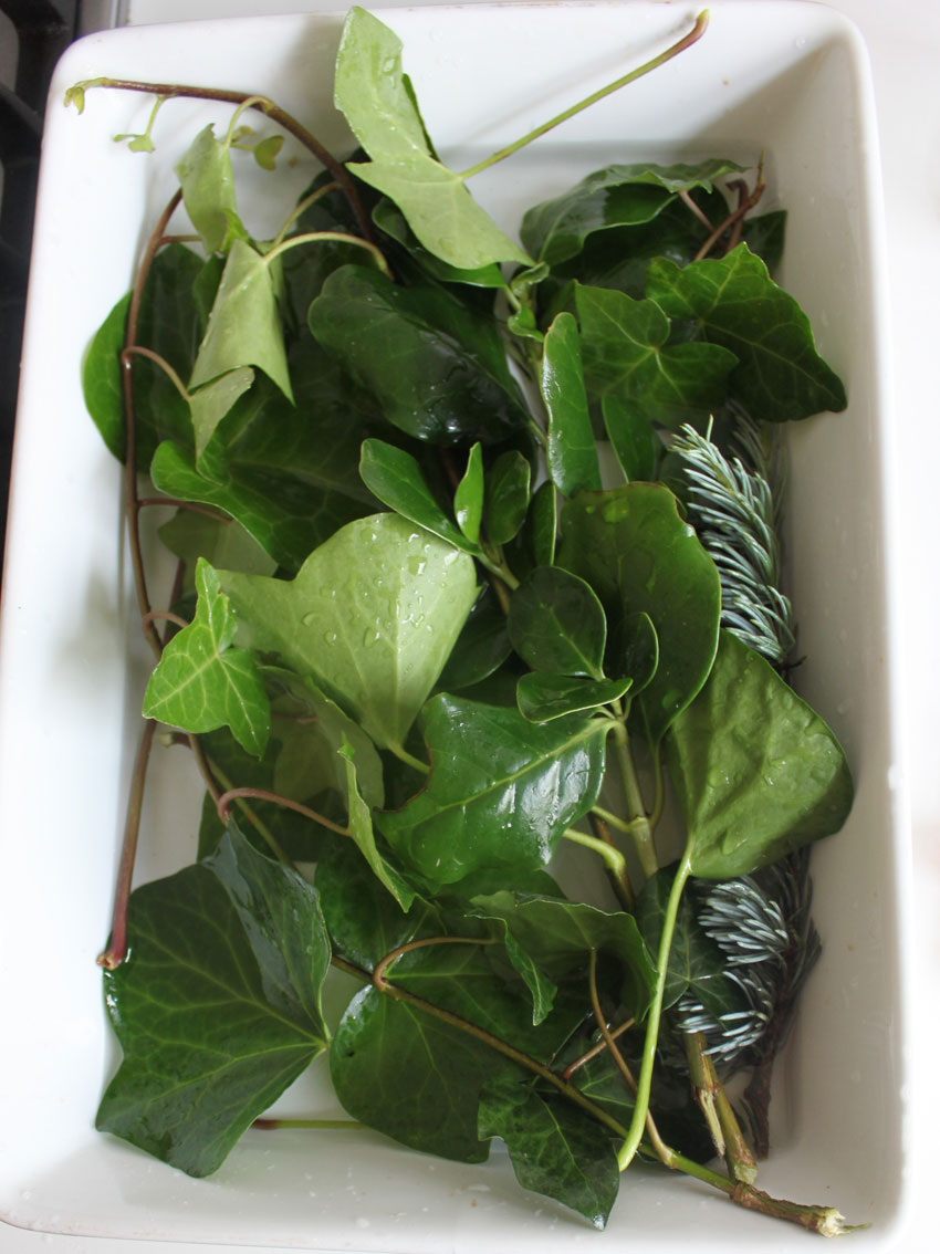 Glycerin preserved leaves