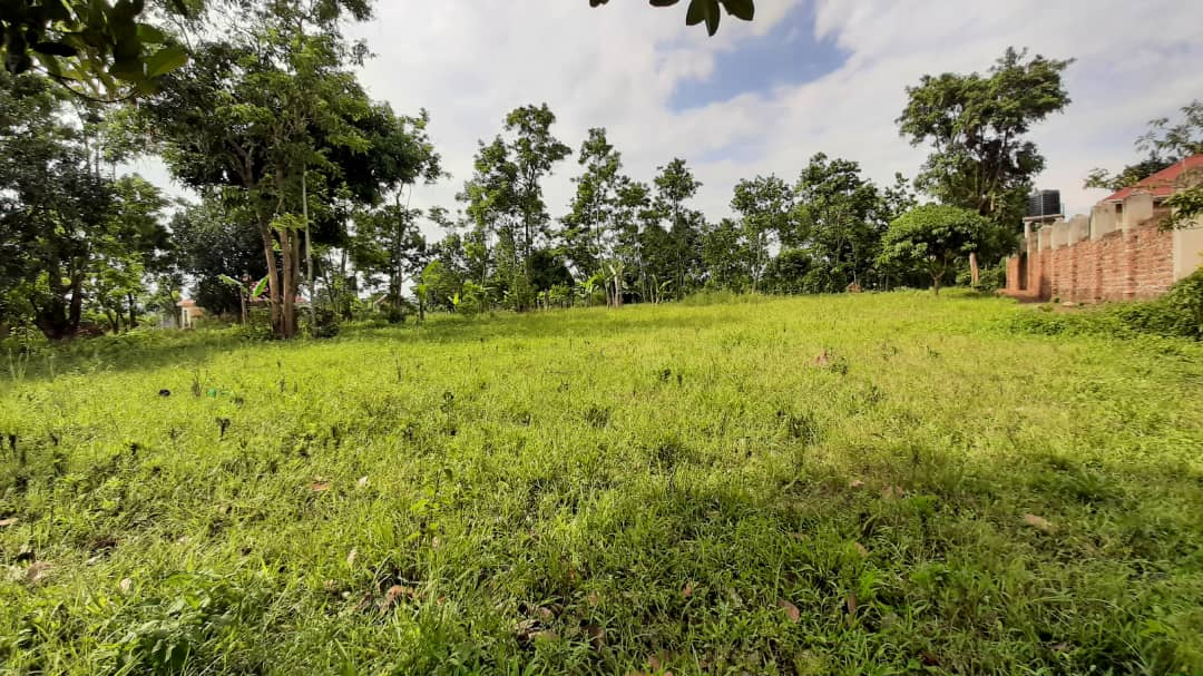 Prime Land For Sale In Bombo Town
