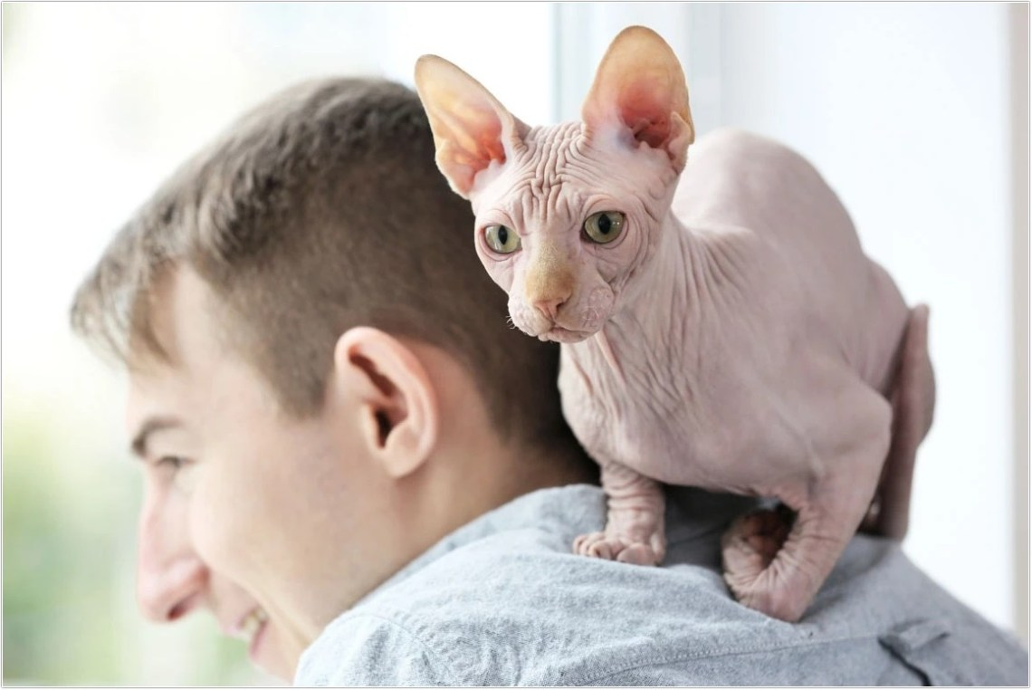 hairless-cat_20