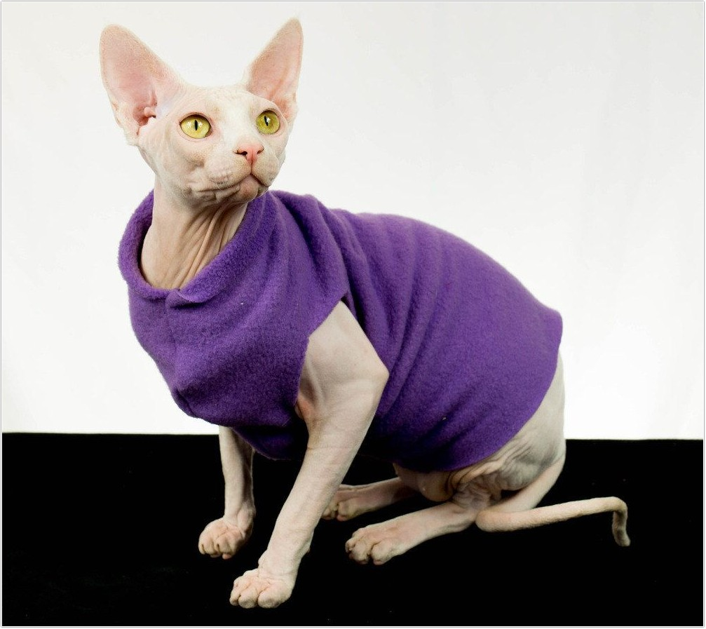 hairless-cat_8
