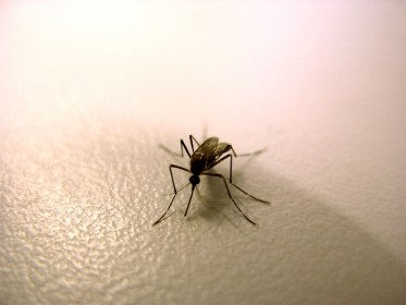 moustique désinsectisation marseille adh nuisibles