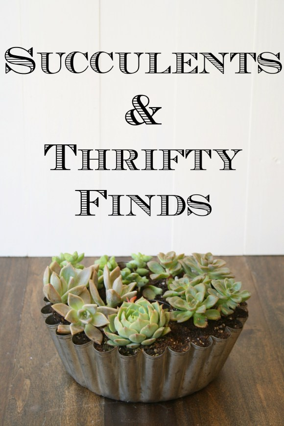 succulents & thrifty finds