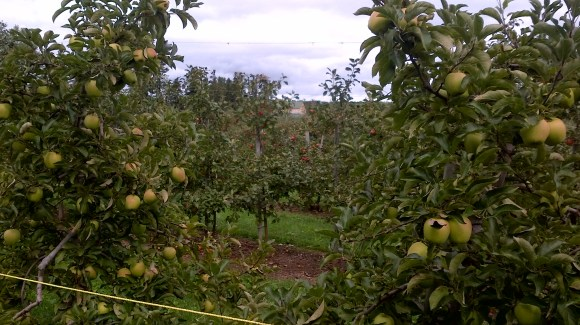 Frootogo orchard