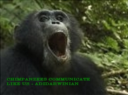 Chimpanzees Communicate Like Us - adidarwinian