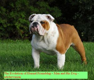 The Evolution of Eternal Friendship - Man and His Dog - adidarwinian