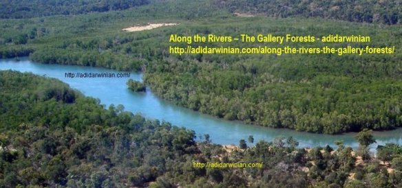 along the rivers - the gallery forests adidarwinian