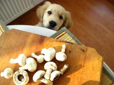 paste de post cu ciuperci 03