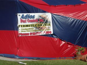 Termite Control | Fumigation | Local treatment | Fume guys of San Diego