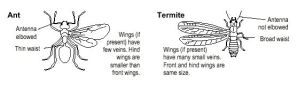 Ants vs Termites