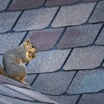 The Dangers of Furry Pests to Your Home [INFOGRAPHIC]