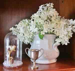 Hydrangea & a No Fail Tip to Prevent Wilting