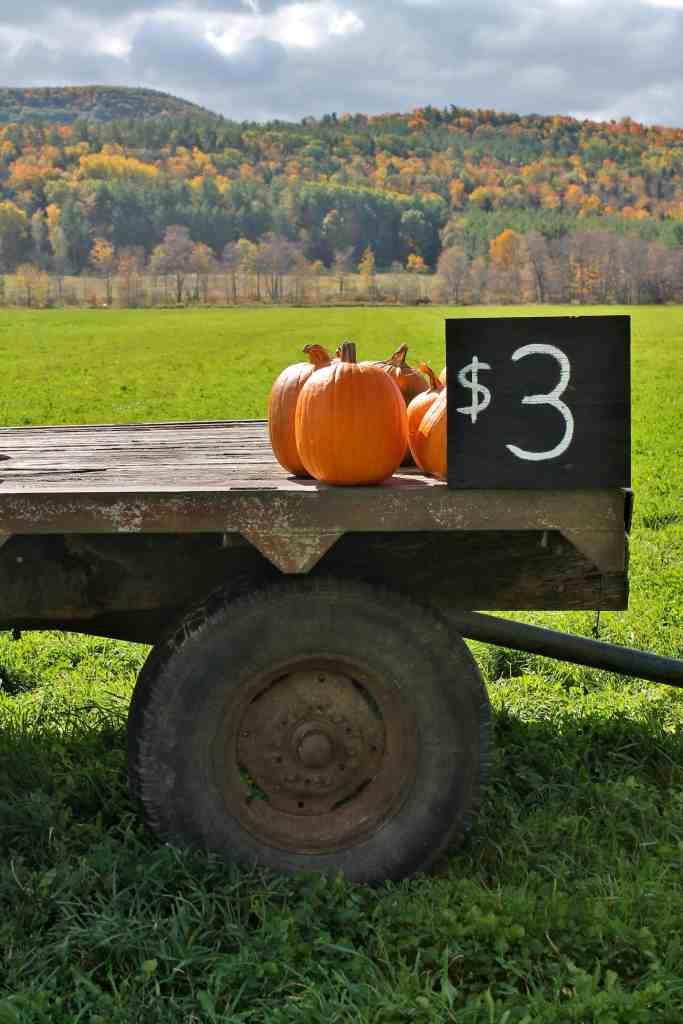 Pumpkins for sale in the Helderbergs Adirondack Girl @ Heart