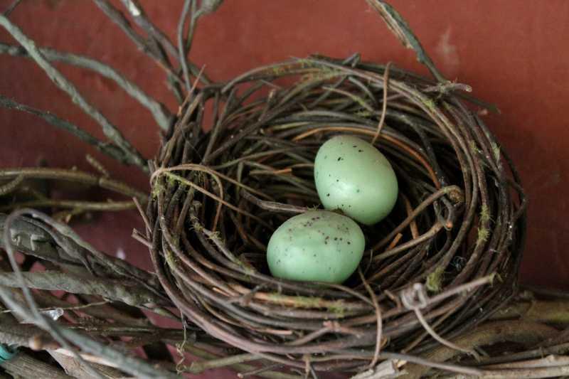 Bird's nest Christian Hess House