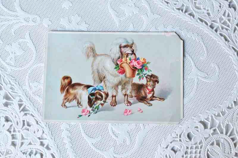 Antique Dog Print