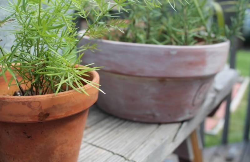 flowers-plants-on-deck-focus-on-asparagus-1024x663