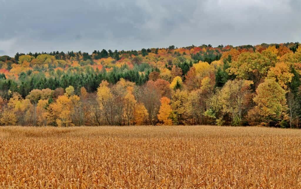 rensselaer-county-fall-foliage-2-1024x644